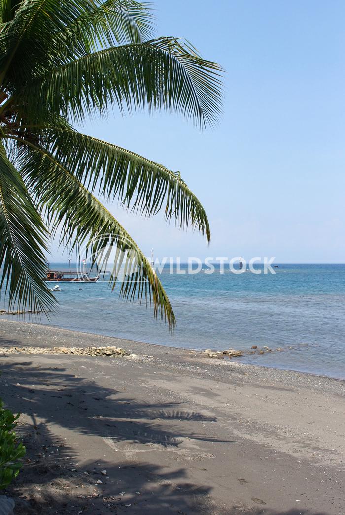Lovina Beach, Bali, Indonesia, Asia 1 Alexander Ludwig Lovina Beach, Bali, Indonesia, Asia