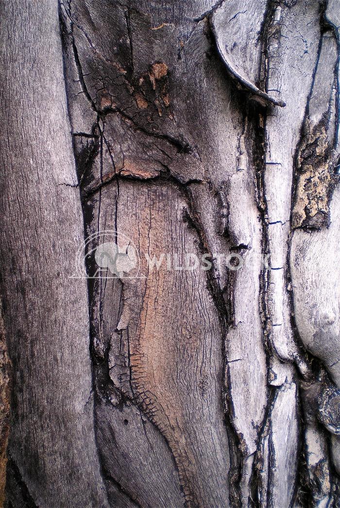 tree bark John Anglim