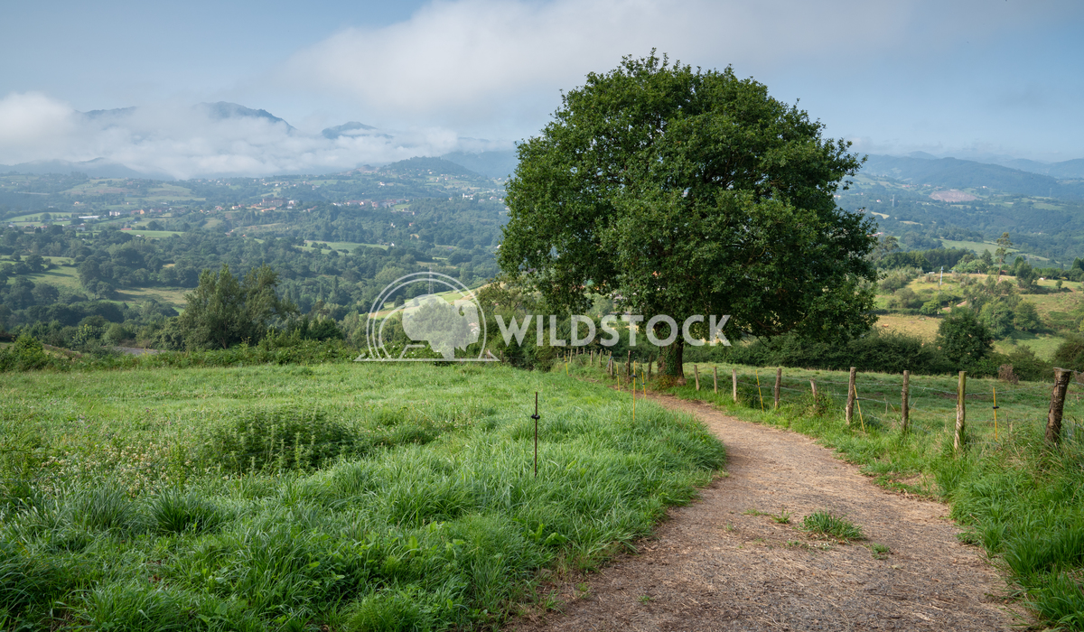 Camino Primitivo, Asturias, Spain 1 Alexander Ludwig Beautiful landscape along the Camino de Santiago, Asturias, Spain