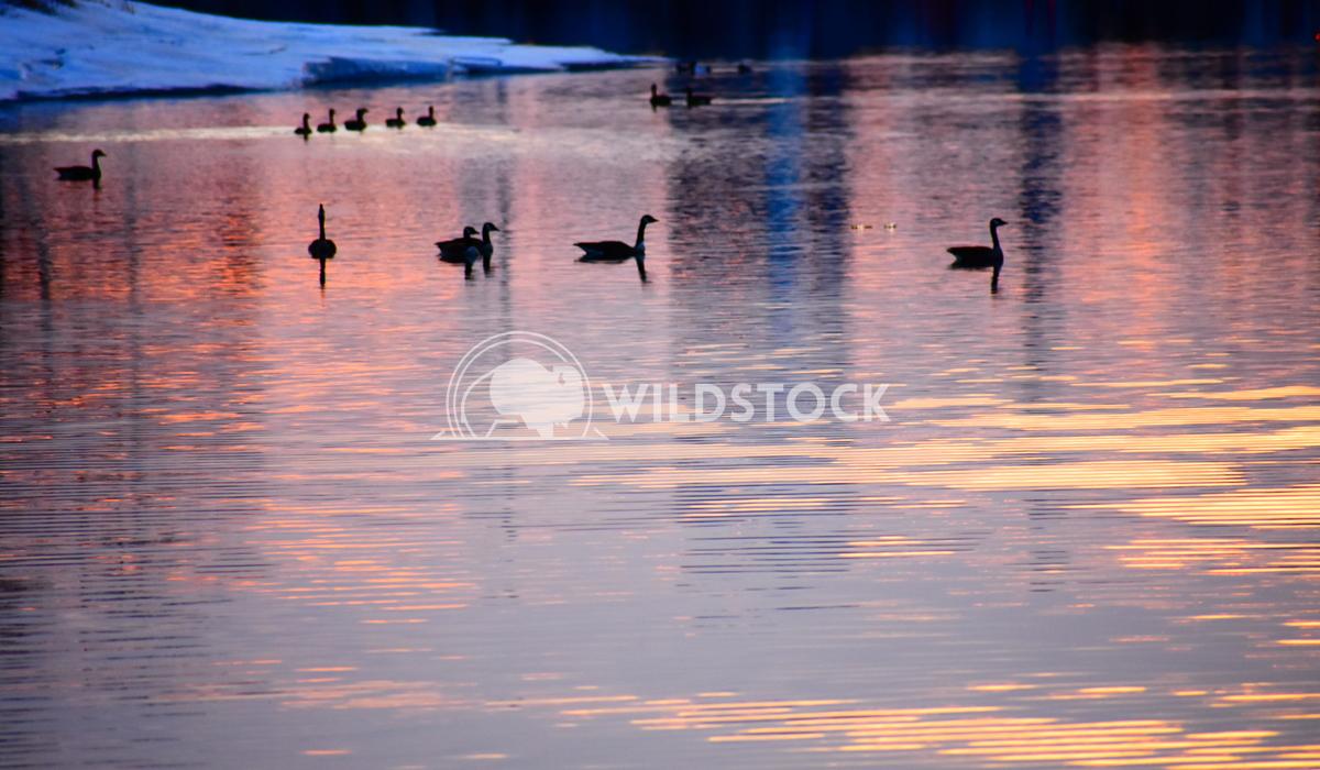 Sunset Geese 2 Gordon Lindgren