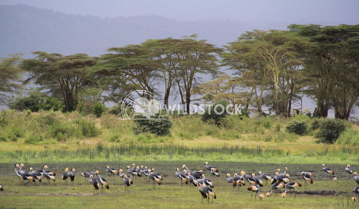 Big Flock Frank  Castro