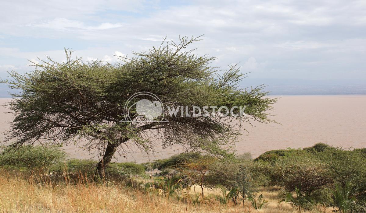 Langano Lake, Ethiopia, Africa 1 Alexander Ludwig Langano Lake in the South of Ethiopia, Africa