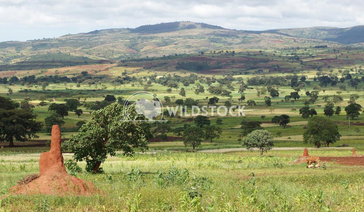 Sidama, Ethiopia, Africa Alexander Ludwig Landscape close to Yabelo, Ethiopia, Africa