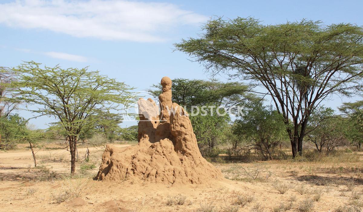 Termite nest, Ethiopia, Africa 2 Alexander Ludwig Termite nest in the south of Ethiopia, Africa