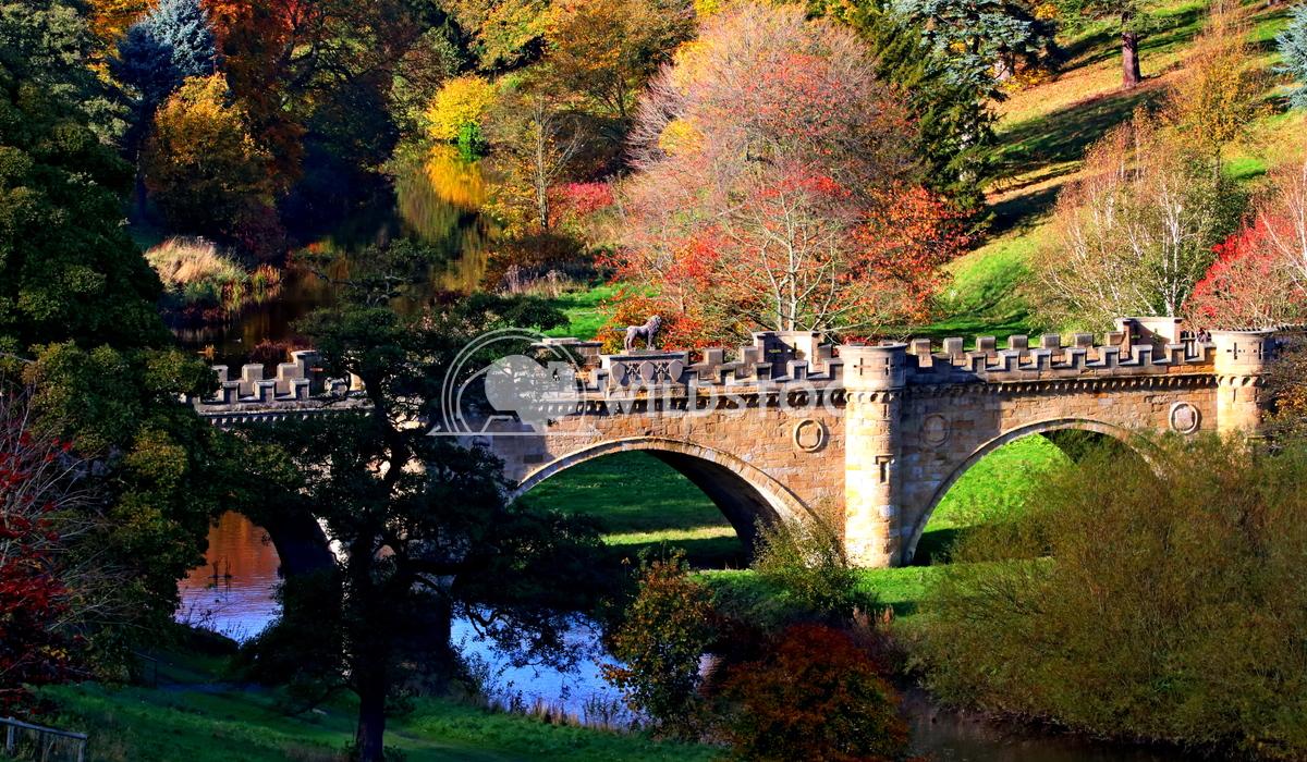 Old English stone lion bridge in autumn  Scott Duffield