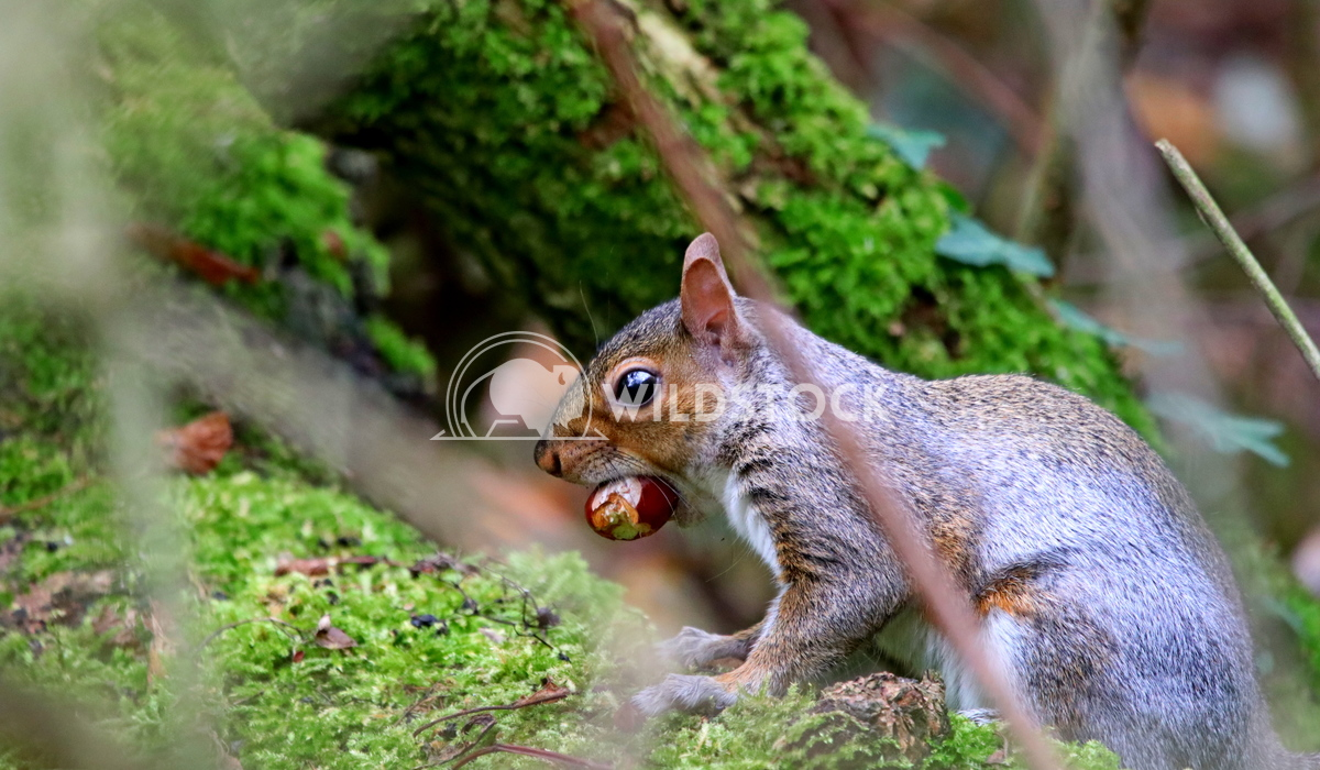 Squirrel cashing nuts  Scott Duffield