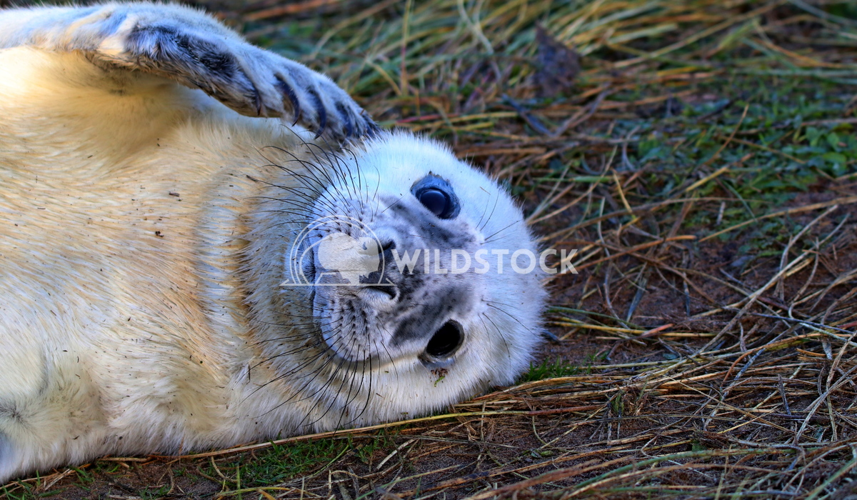 Seal 1 Scott Duffield