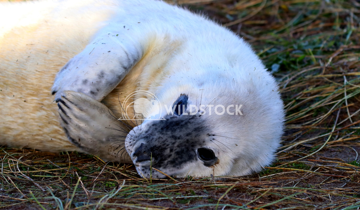 Seal 2 Scott Duffield