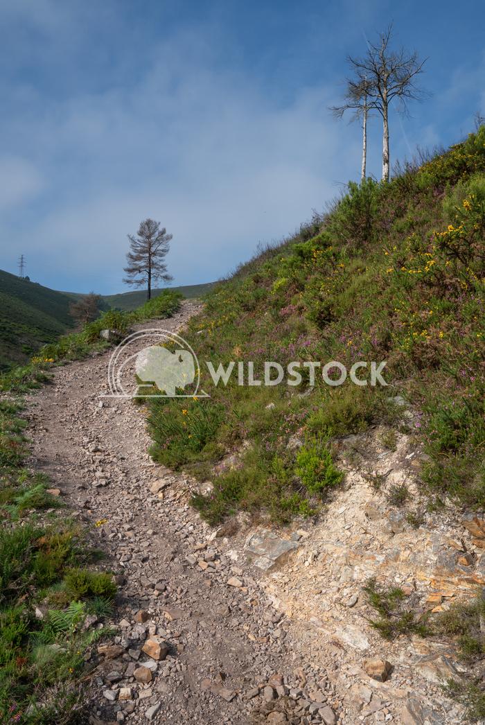 Camino Primitivo, Asturias, Spain 26 Alexander Ludwig Camino de Santiago trail, Asturias, Spain