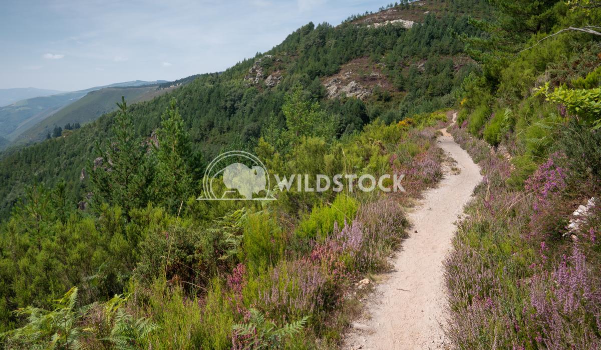 Camino Primitivo, Asturias, Spain 37 Alexander Ludwig Camino de Santiago trail, Asturias, Spain