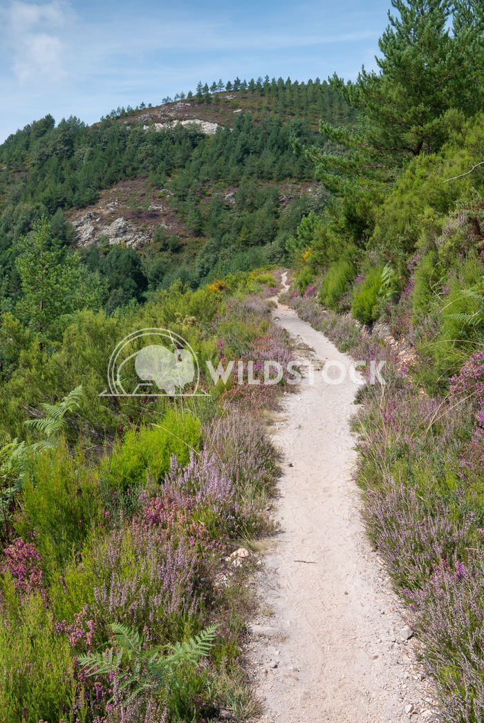 Camino Primitivo, Asturias, Spain 38 Alexander Ludwig Camino de Santiago trail, Asturias, Spain