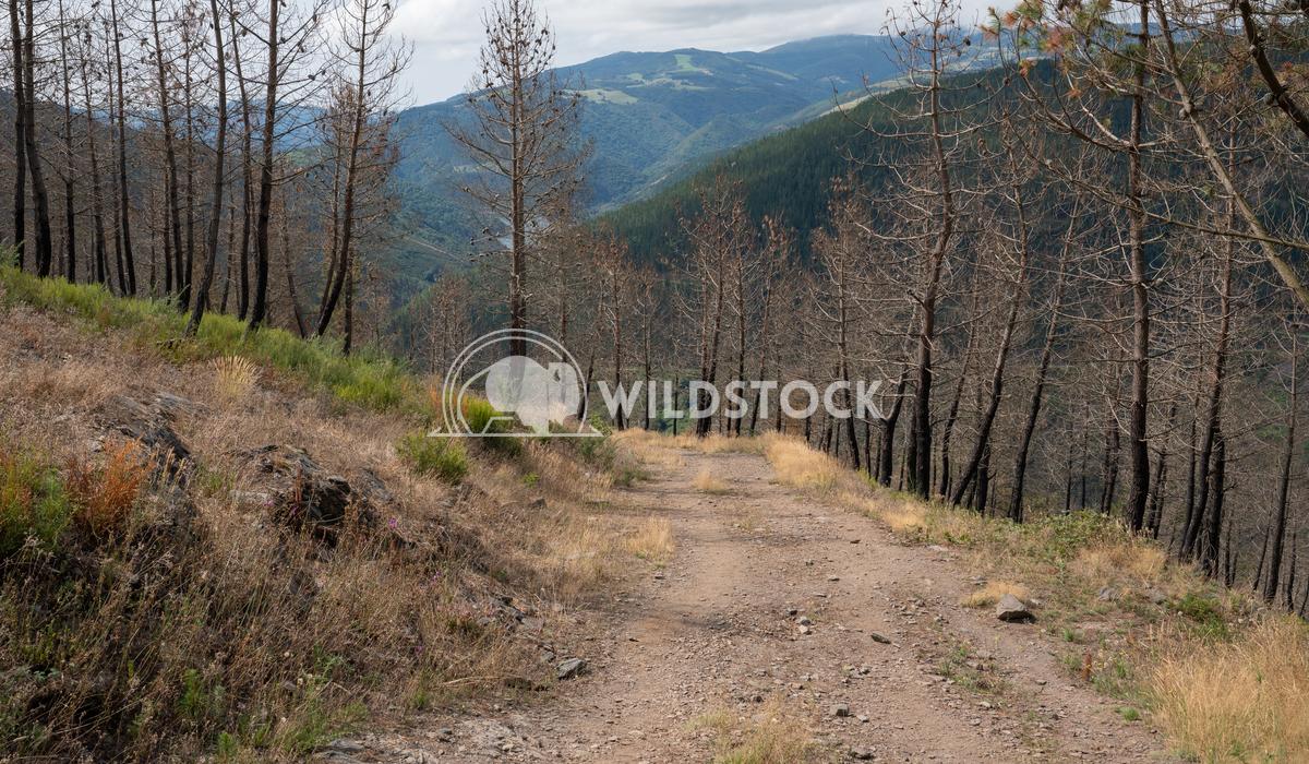 Camino Primitivo, Asturias, Spain 41 Alexander Ludwig Camino de Santiago trail, Asturias, Spain