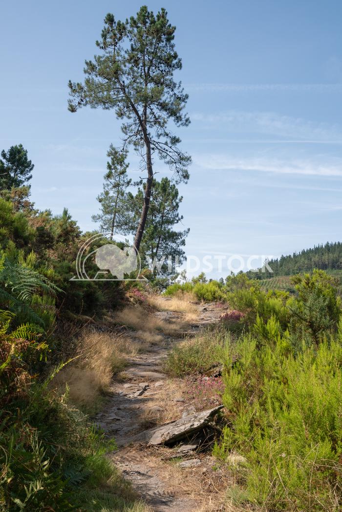 Camino Primitivo, Asturias, Spain 46 Alexander Ludwig Camino de Santiago trail, Asturias, Spain