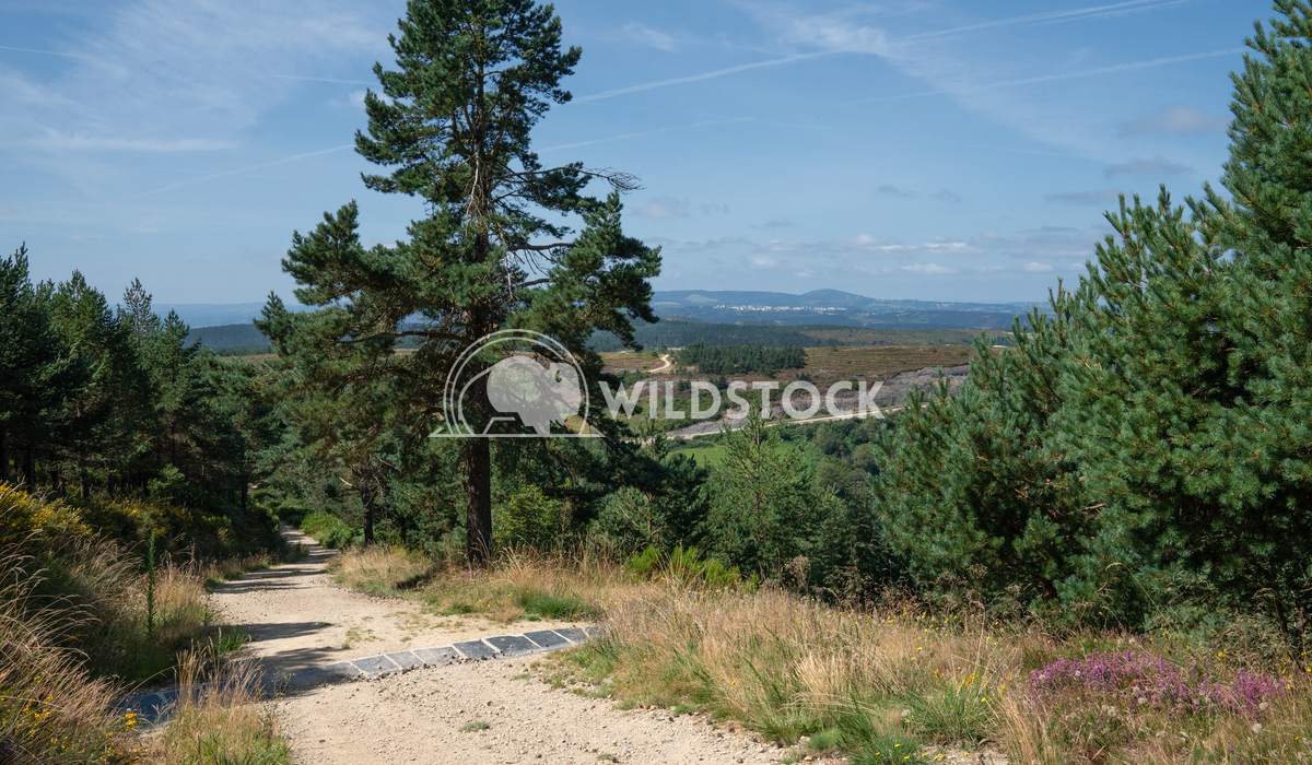Camino Primitivo, Galicia, Spain 1 Alexander Ludwig Panoramic landscape along the Camino de Santiago trail, Spain