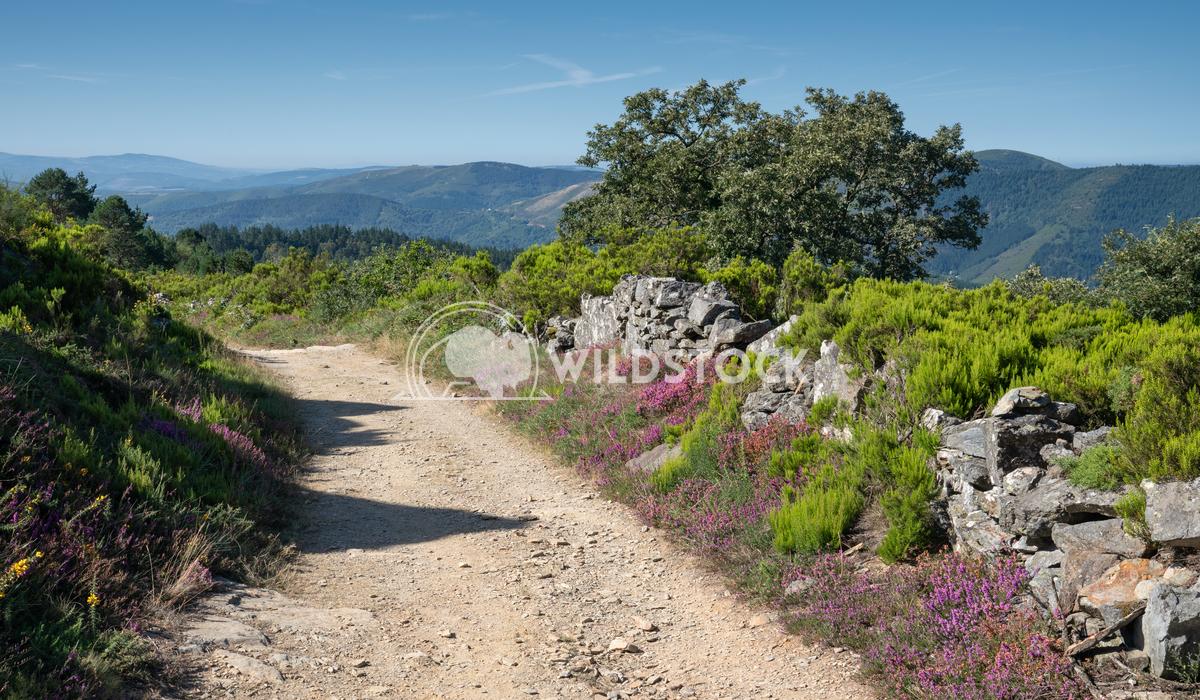 Camino Primitivo, Galicia, Spain 4 Alexander Ludwig Panoramic landscape along the Camino de Santiago trail, Spain