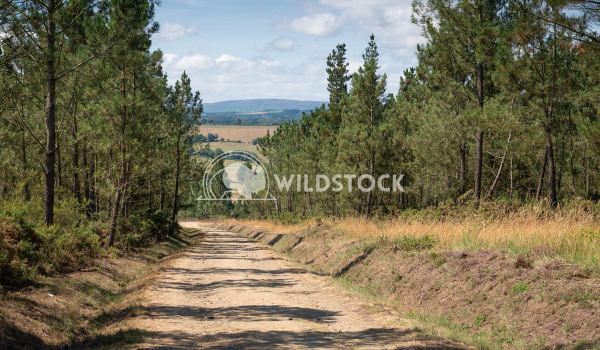 Camino Primitivo, Galicia, Spain 5 Alexander Ludwig Panoramic landscape along the Camino de Santiago trail, Spain