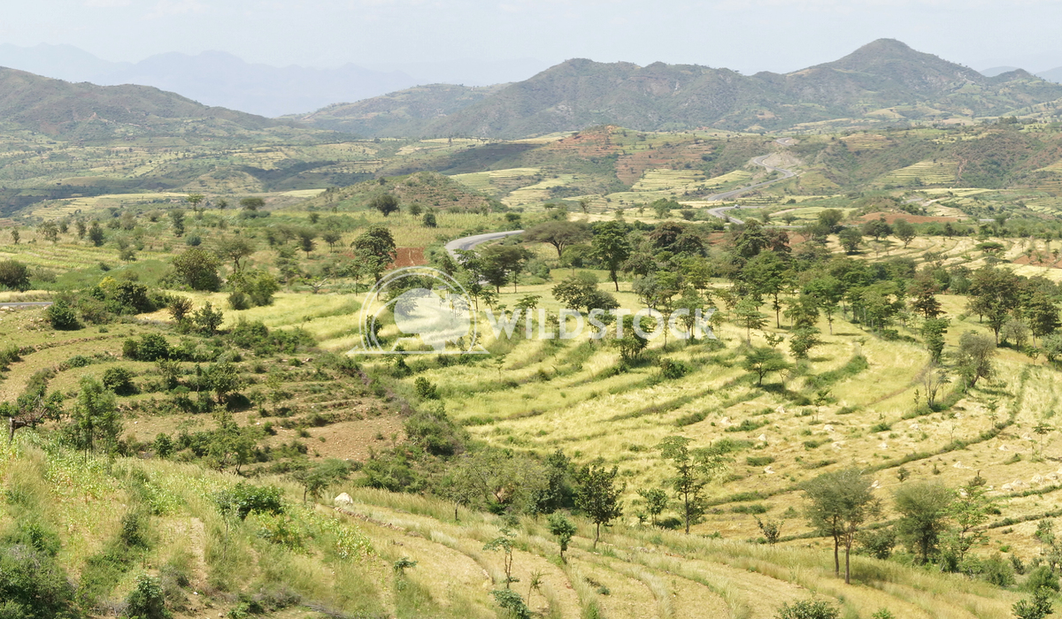 Landscape, Ethiopia, Africa 5 Alexander Ludwig Traditional terraced fields of Konso people, Ethiopia, Africa