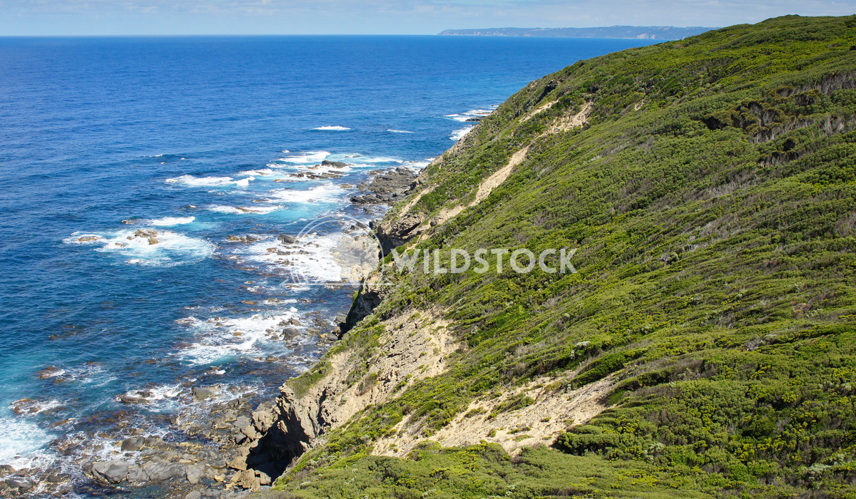 Cape Otway National Park, Australia 1 Alexander Ludwig Landscape of the Cape Otway National Park, Victoria, Australia