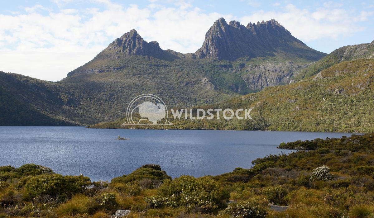 Cradle Mountain National Park, Tasmania, Australia 1 Alexander Ludwig Cradle Mountain National Park, Tasmania, Australia