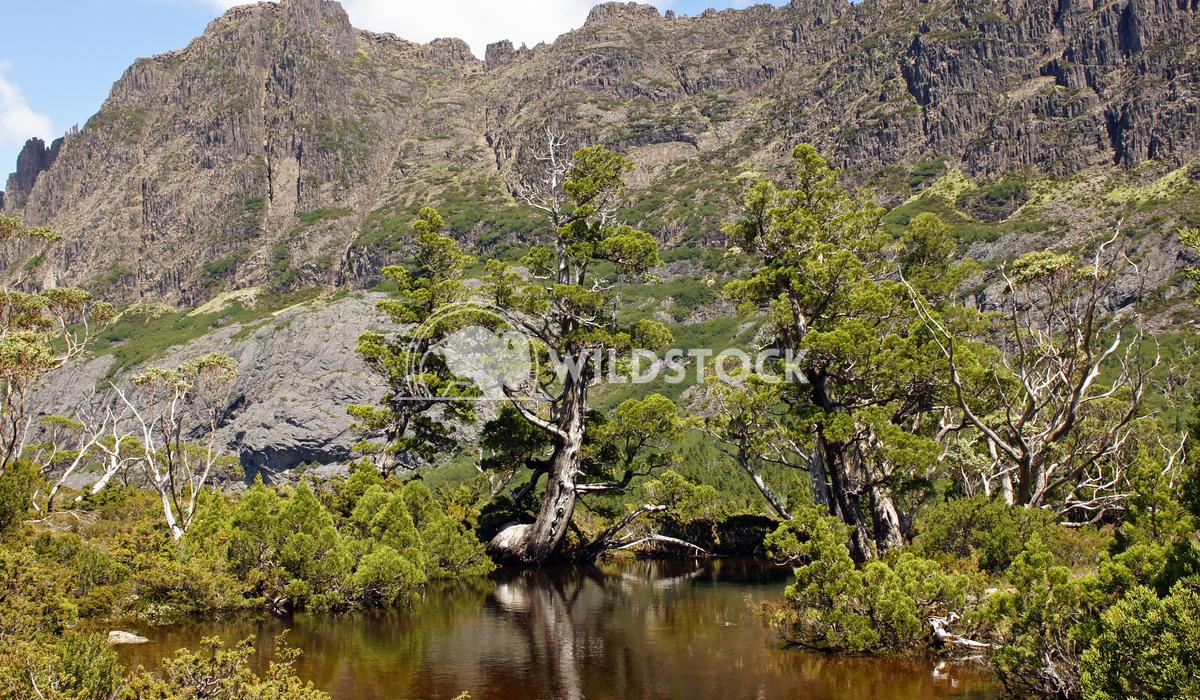 Cradle Mountain National Park, Tasmania, Australia 8 Alexander Ludwig Cradle Mountain National Park, Tasmania, Australia