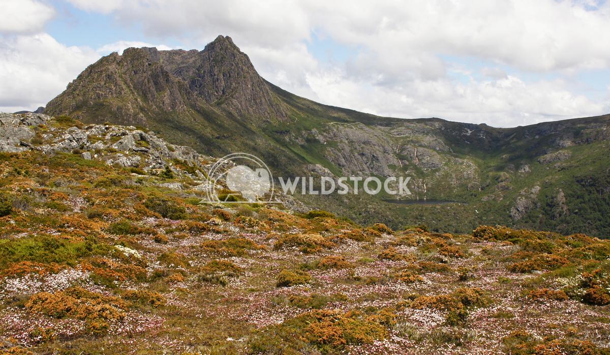 Cradle Mountain National Park, Tasmania, Australia 10 Alexander Ludwig Cradle Mountain National Park, Tasmania, Australi