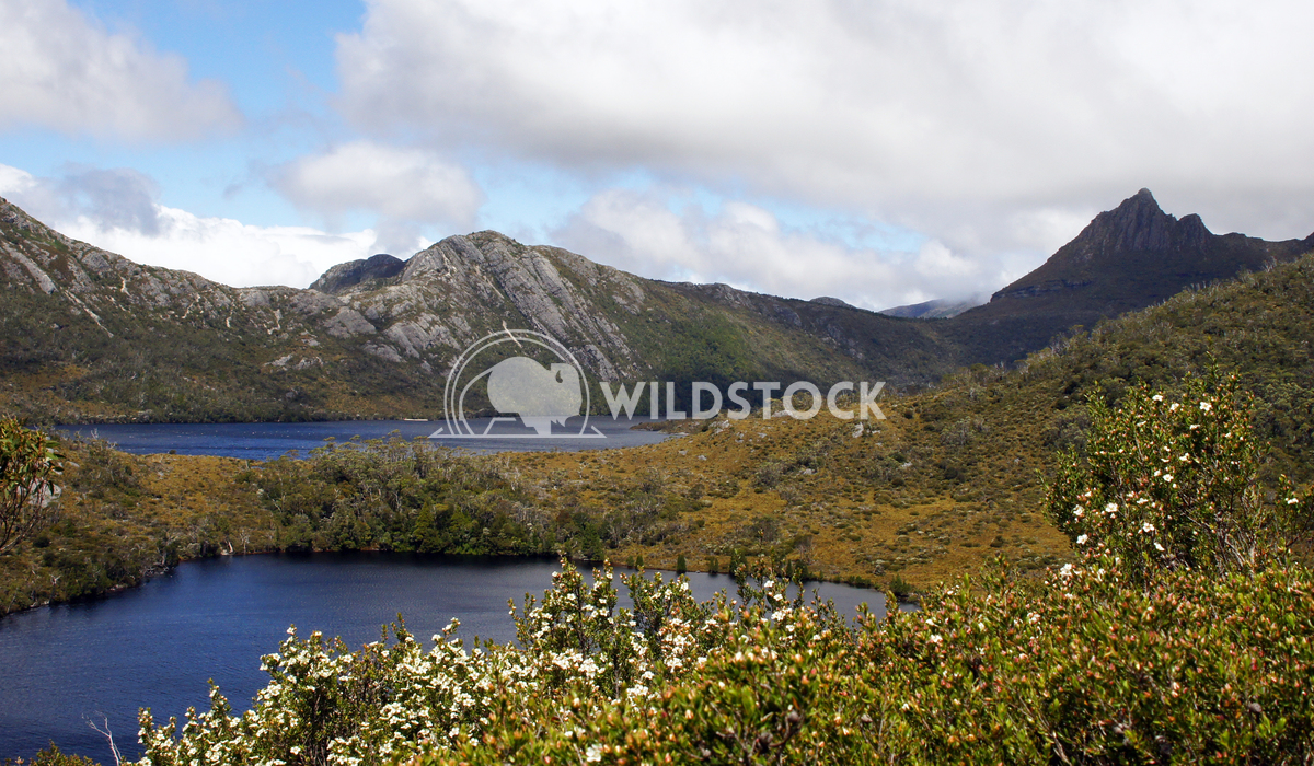 Cradle Mountain National Park, Tasmania, Australia 13 Alexander Ludwig Cradle Mountain National Park, Tasmania, Australi