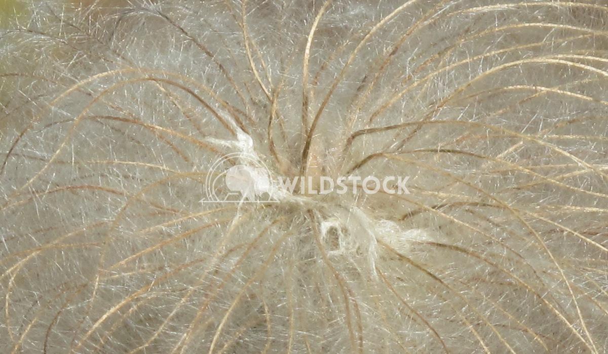 Web of Mystery Henry McCluster
