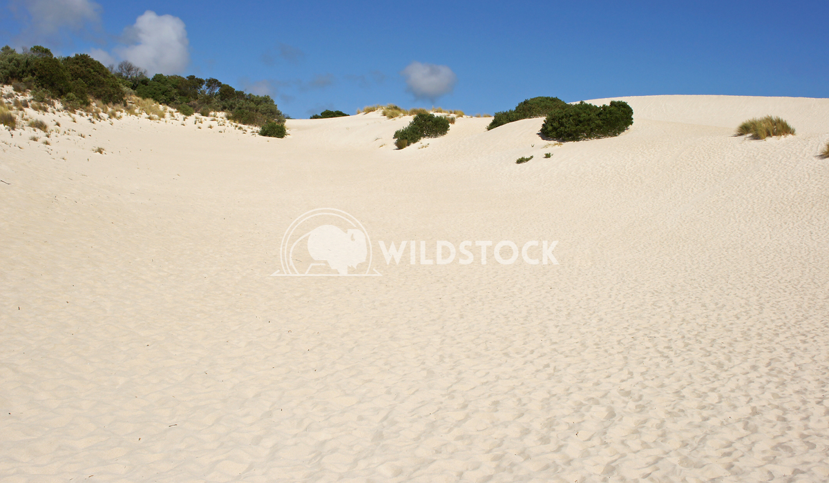 Little Sahara, Kangaroo Island, South Australia 1 Alexander Ludwig Dunes of Little Sahara, Kangaroo Island, South Austra