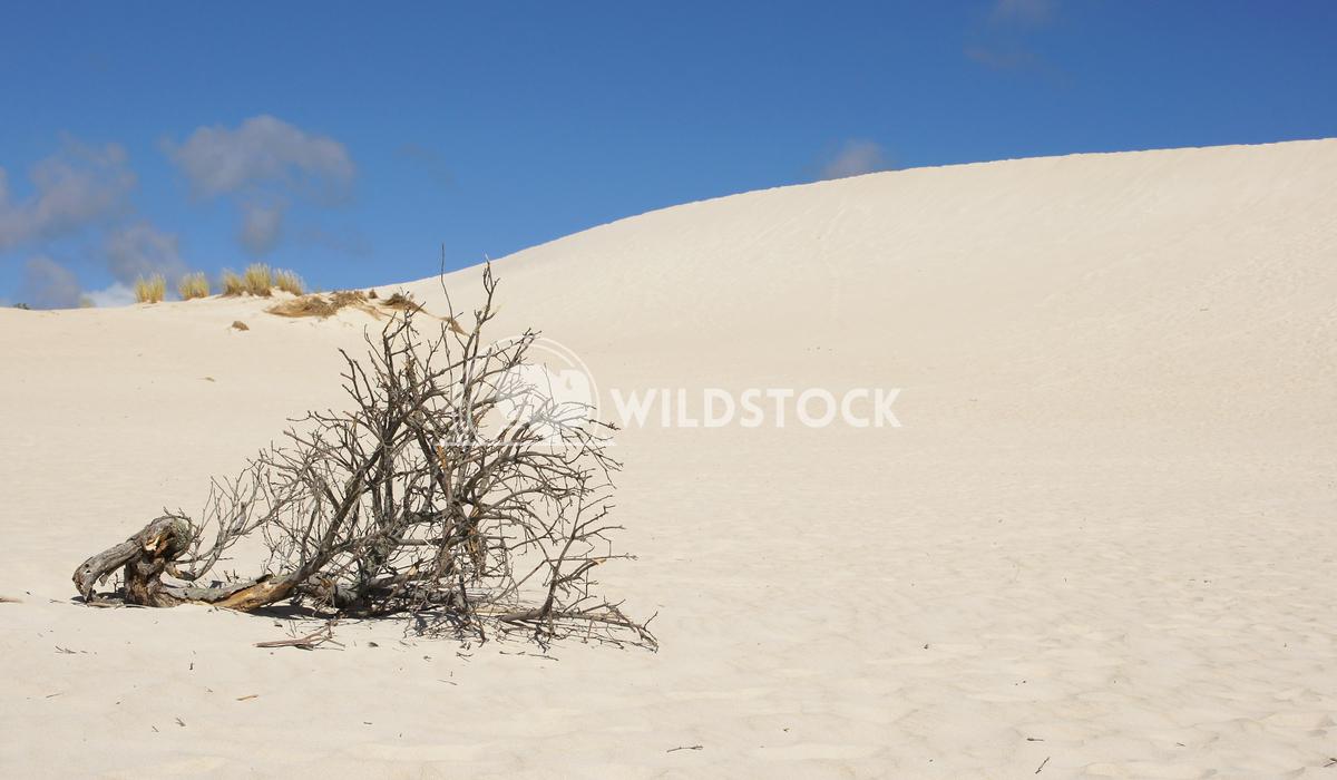 Little Sahara, Kangaroo Island, South Australia 3 Alexander Ludwig Dunes of Little Sahara, Kangaroo Island, South Austra