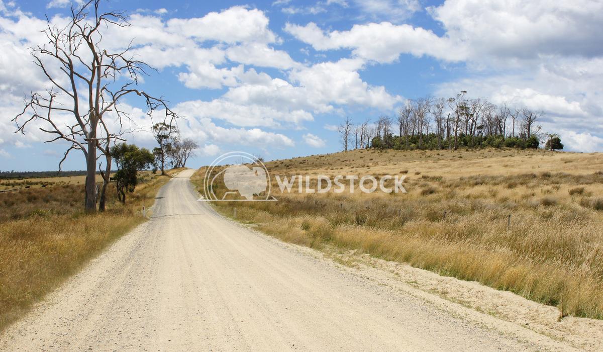 Dirt road, Tasmania, Australia 2 Alexander Ludwig Typical dirt road in the north of Tasmania, Australia