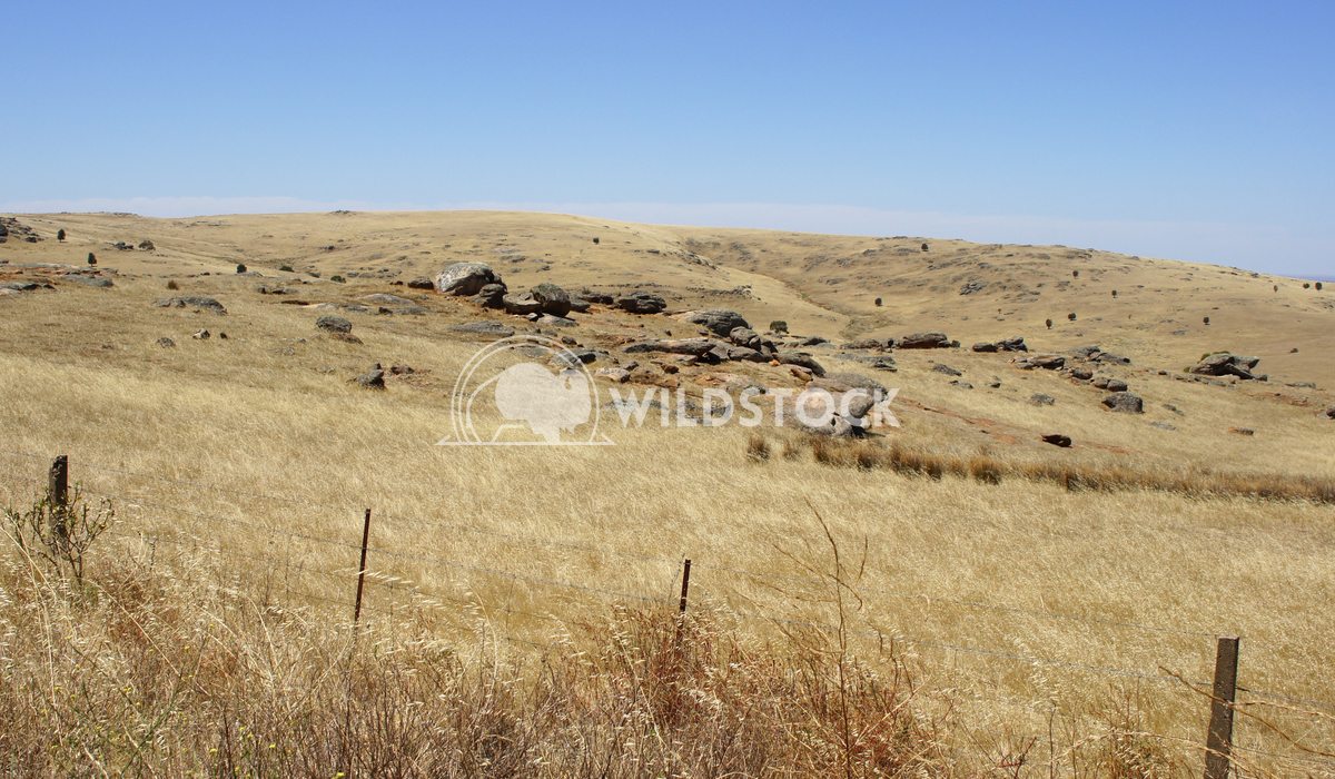 Landscape of South Australia 2 Alexander Ludwig Broad acres in the south of Australia