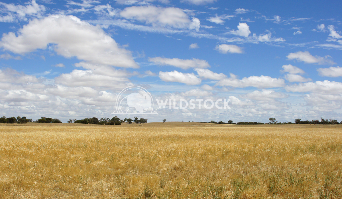 Landscape of South Australia 1 Alexander Ludwig Broad acres in the south of Australia