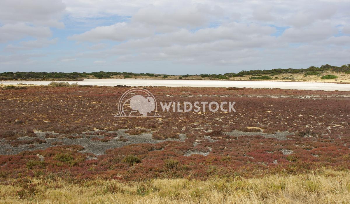 Coorong National Park, Australia Alexander Ludwig Landscape of Coorong National Park, Australia