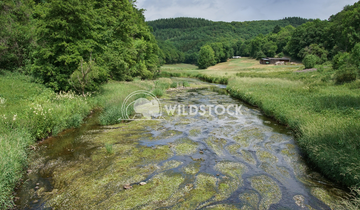 Creek, Landscape of Eifel, Germany 2 Alexander Ludwig Landscape of Eifel area close to Bitburg, Germany, Europe