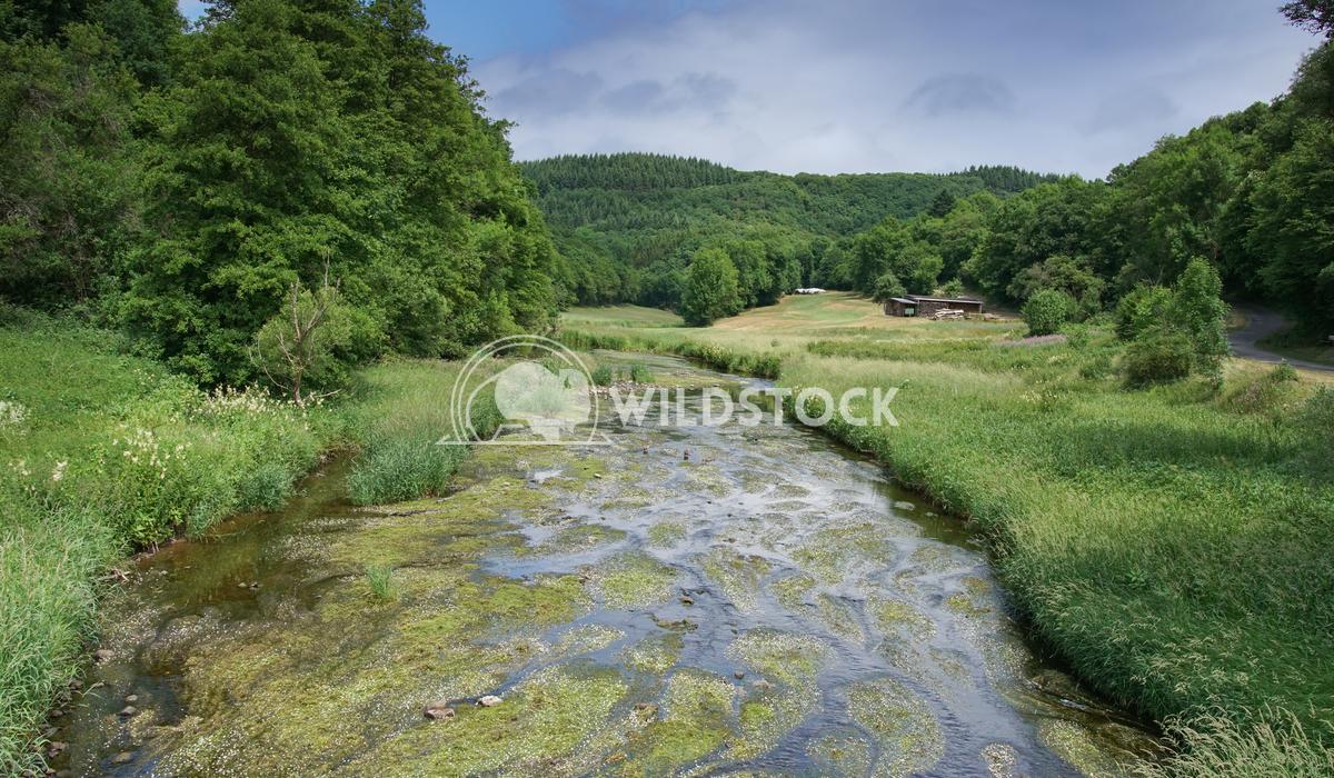 Creek, Landscape of Eifel, Germany 1 Alexander Ludwig Landscape of Eifel area close to Bitburg, Germany, Europe