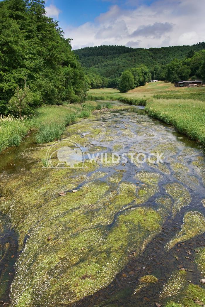 Creek, Landscape of Eifel, Germany 4 Alexander Ludwig Landscape of Eifel area close to Bitburg, Germany, Europe