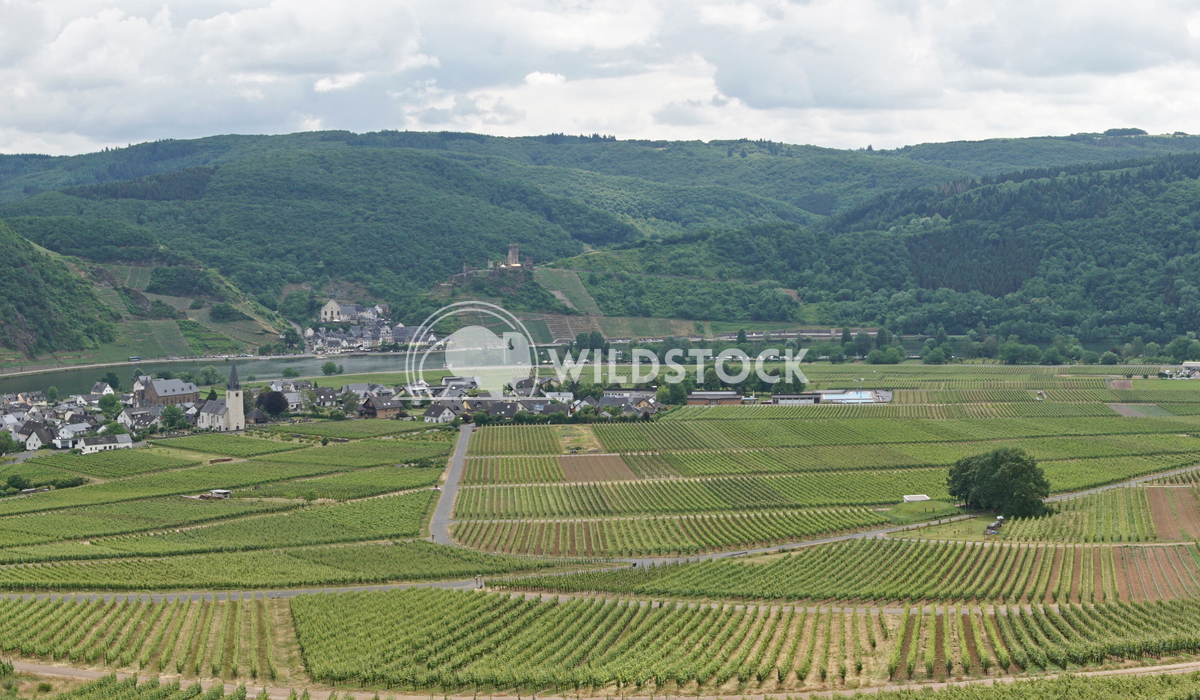 Moselle valley, Germany Alexander Ludwig Moselle valley close to Beilstein, Germany, Europe