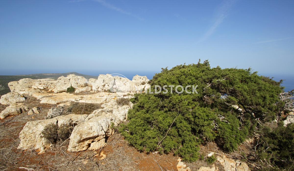 Akamas Peninsula, Cyprus, Europe 2 Alexander Ludwig Landscape of Akamas Peninsula in the north of the Cyprus island, Eur