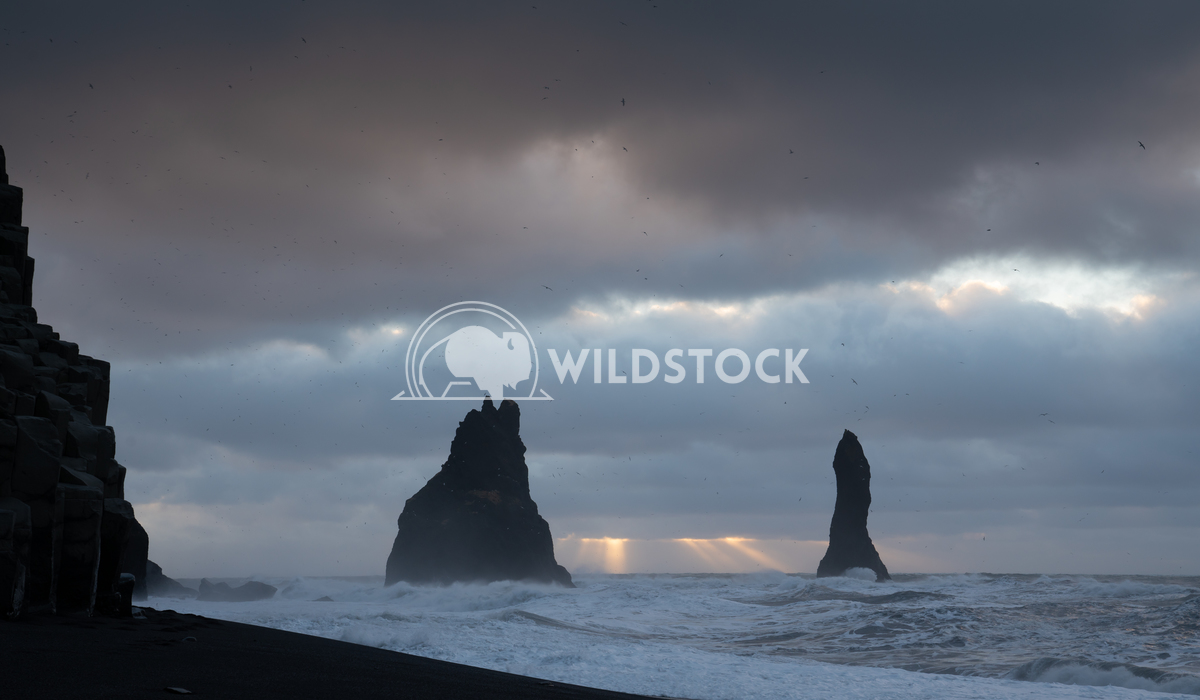Reynisfjara close to Vik, Iceland, Europe 4 Alexander Ludwig Rock spire of Reynisdrangur, coast of Reynisfjara close to