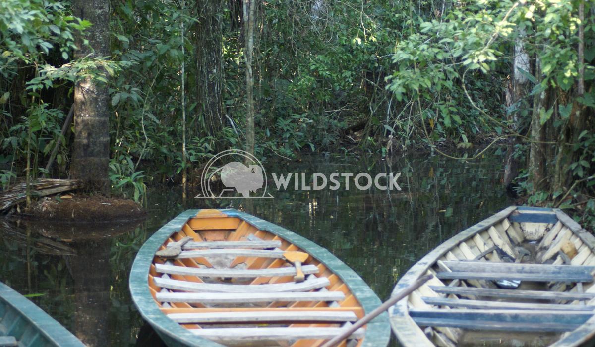 Preferred Mode On The Amazon Frank  Castro