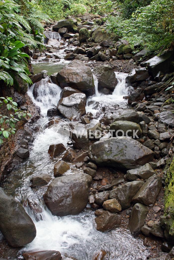 Rainforest, Guadeloupe, Caribbean Alexander Ludwig Creek in the rainforest of Guadeloupe, Caribbean