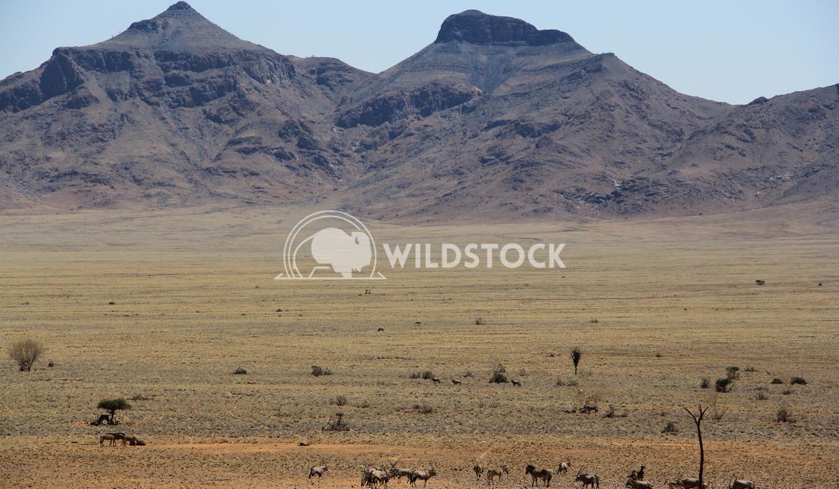 Moonscape Namibia Frank  Castro