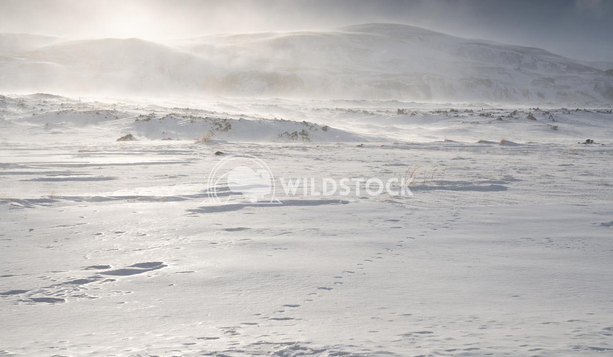 Winter in Iceland, Europe 1 Alexander Ludwig Winter, Iceland, Europe