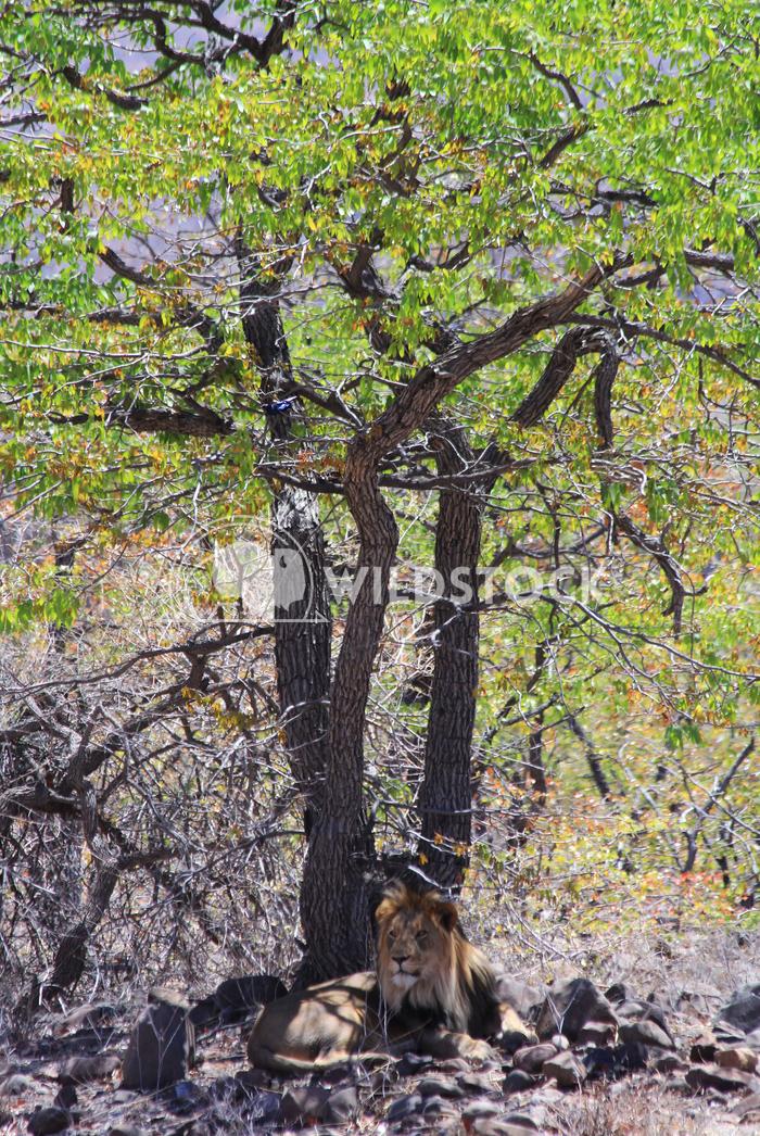 Namibian Foliage Frank  Castro