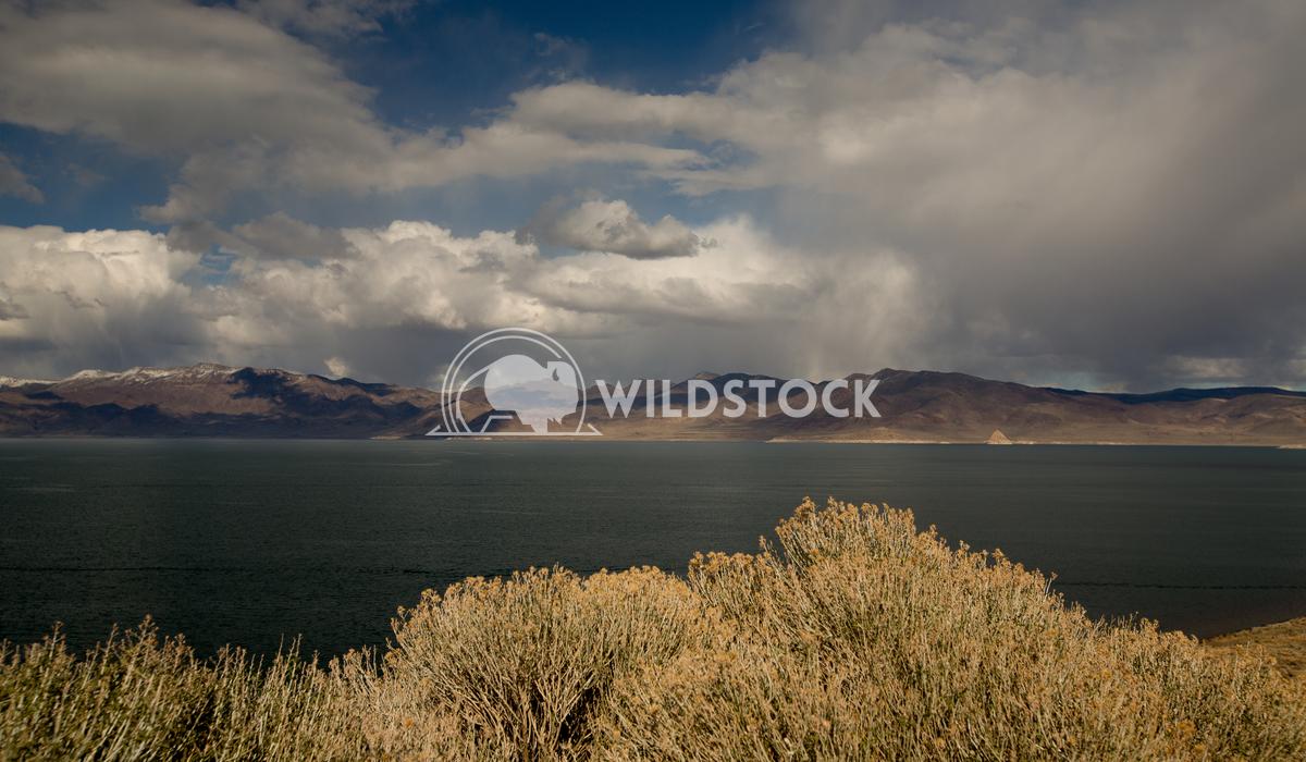 Pyramid Lake Peaking Henry McCluster