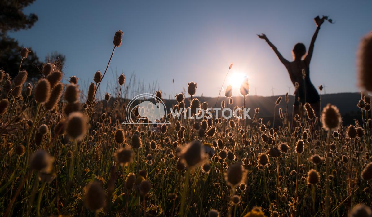 Girl in the forest sunset. Jaime Navas