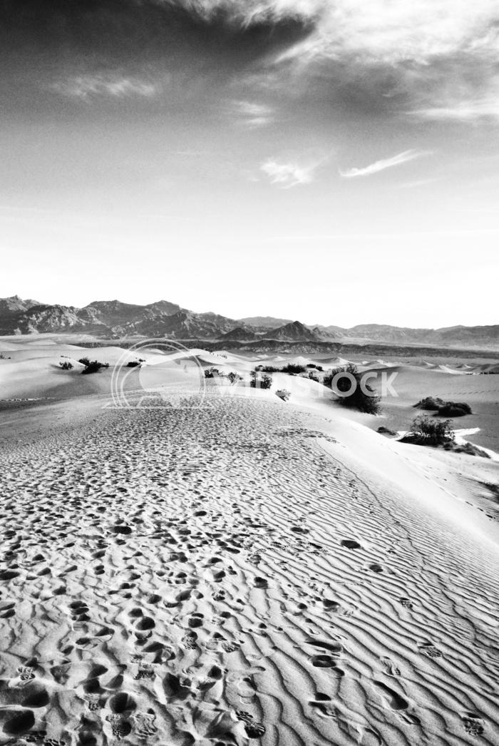 Desert Dunes Black&White Carolyne Vowell