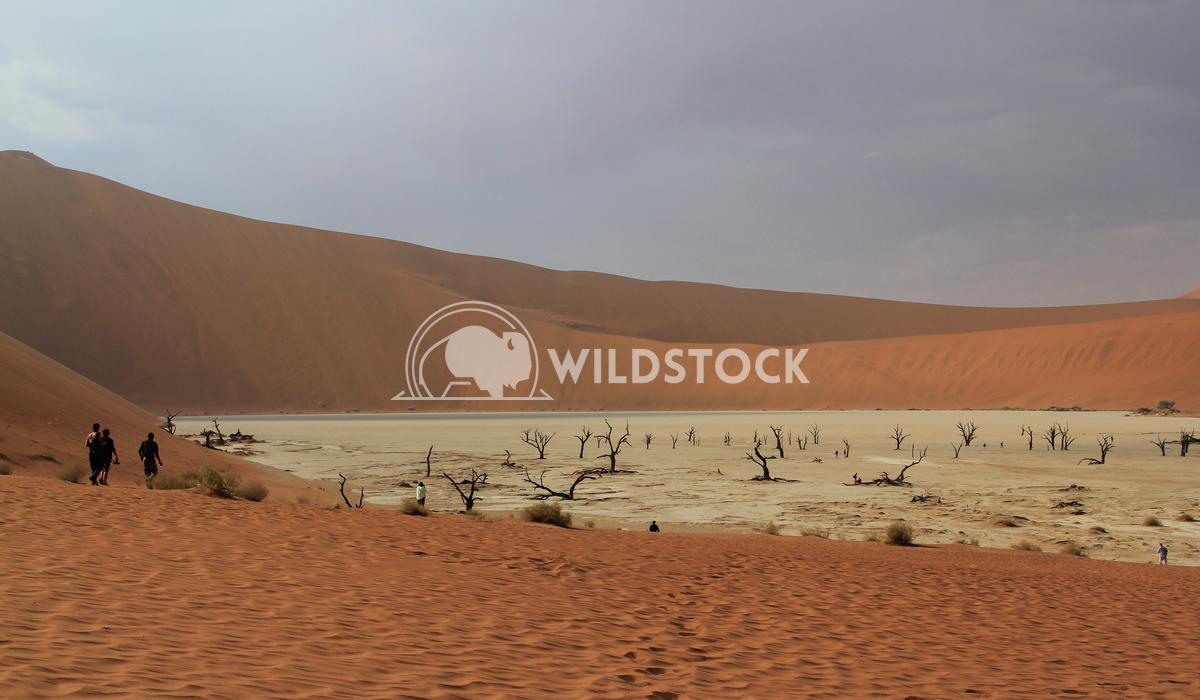 Desert Storm Rolling In Frank  Castro