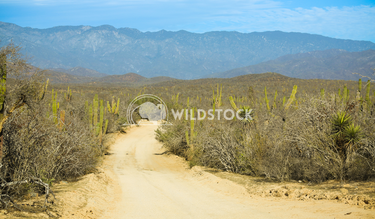 Baja Road to Laguna 2 Henry McCluster