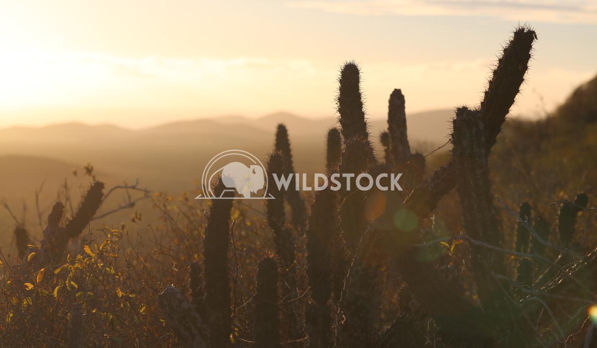 Sun Sets in Baja Fog Henry McCluster